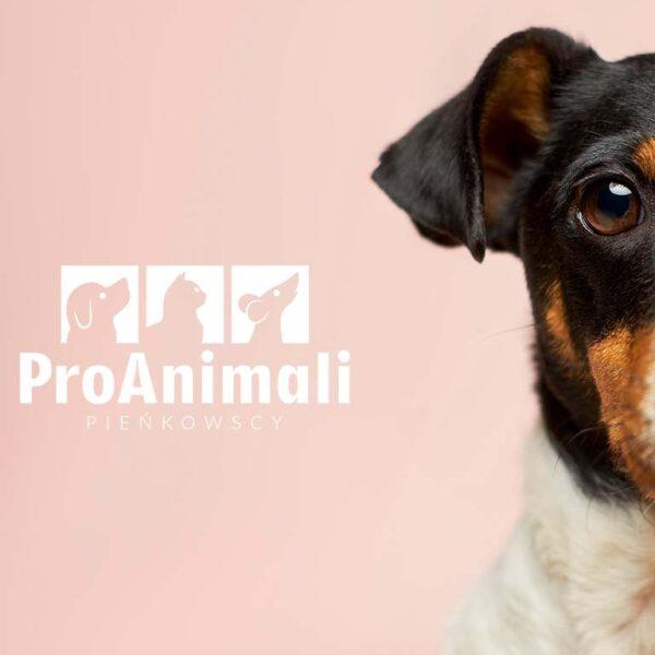 Logo dla apteki ProAnimal zaprojektowane Viatas studio